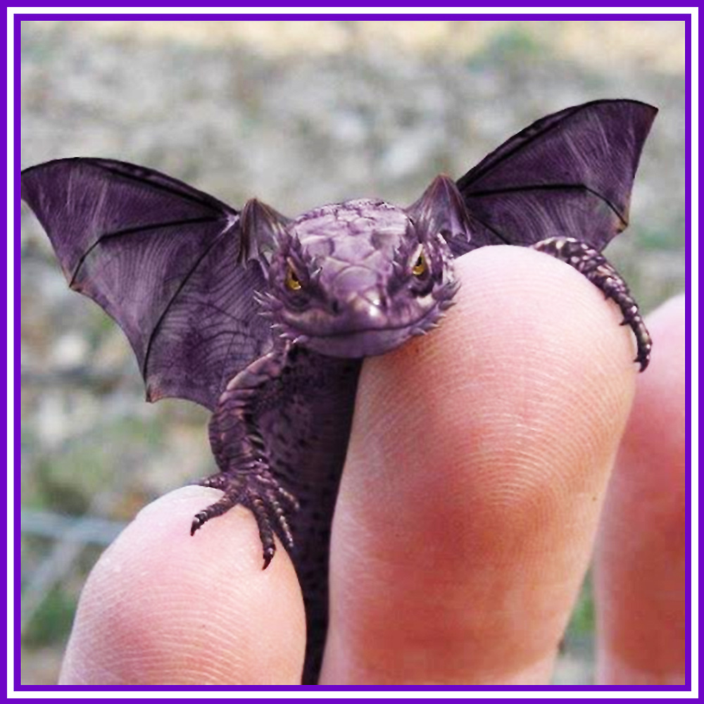 Get Your Very Own Fairy Dragon via the Magick Egg Process